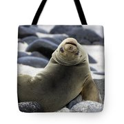 Galapagos Sea Lion Tote Bag by David Hosking and Photo Researchers