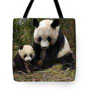 Giant Panda Ailuropoda Melanoleuca Tote Bag by Katherine Feng