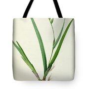 Gladiolus Cardinalis Tote Bag by Pierre Joseph Redoute