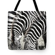 Grazing Zebras Close Up Tote Bag by Darcy Michaelchuk