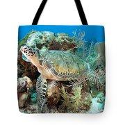 Green Sea Turtle On Caribbean Reef Tote Bag by Karen Doody