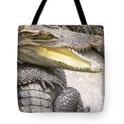 Group Of Crocodiles Tote Bag by Jorgo Photography - Wall Art Gallery