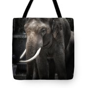 Hanging Out Tote Bag by Joan Carroll