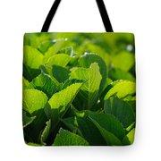Hydrangea foliage Tote Bag by Gaspar Avila
