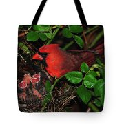 I Have My Eye On You Tote Bag by Frozen in Time Fine Art Photography