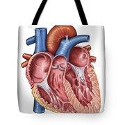 Interior Of Human Heart Tote Bag by Stocktrek Images