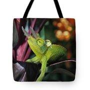 Jacksons Chameleon On Leaf Tote Bag by Dave Fleetham - Printscapes