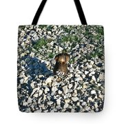 Killdeer 2 Tote Bag by Douglas Barnett