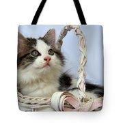 Kitten In Basket Tote Bag by Jai Johnson
