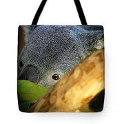 Koala Bear  Tote Bag by Anthony Jones