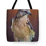Light morph immature Swainsons Hawk Tote Bag by Ernie Echols