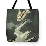 Little Tern Tote Bag by John James Audubon