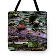 Lone Duck Tote Bag by David Patterson