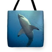 Male Great White Sharks Belly Tote Bag by Todd Winner