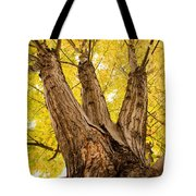 Maple Tree Portrait Tote Bag by James BO  Insogna
