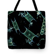 Marine Phytoplankton Tote Bag by DP Wilson and Photo Researchers