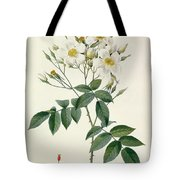 Musk Rose Tote Bag by Pierre Joseph Redoute