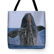 North Atlantic Right Whale breaching Tote Bag by Tony Beck
