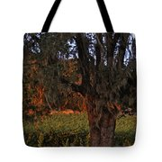 Oak Tree And Vineyards In Knight's Valley Tote Bag by Charlene Mitchell