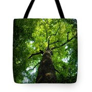 Old Growth Tote Bag by David Lee Thompson