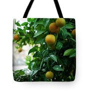 Orange Tree Tote Bag by Lorraine Devon Wilke