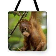 Orangutan Pongo Pygmaeus Baby Swinging Tote Bag by Christophe Courteau