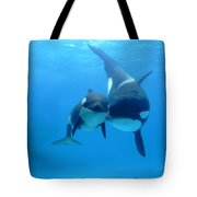 Orca Orcinus Orca Mother And Newborn Tote Bag by Hiroya Minakuchi