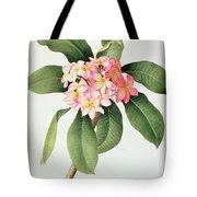 Plumeria Tote Bag by Georg Dionysius Ehret