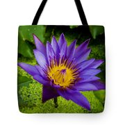 Purple Water Lily Tote Bag by Ray Laskowitz - Printscapes
