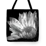 Raindrops on Daisy Black and White Tote Bag by Jennie Marie Schell