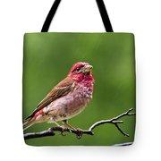 Rainy Day Bird - Purple Finch Tote Bag by Christina Rollo