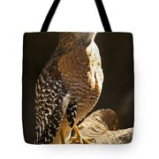 Red-shouldered Hawk Tote Bag by Carolyn Marshall