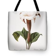Redoute: Datura, 1833 Tote Bag by Granger