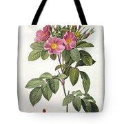 Rosa Carolina Corymbosa Tote Bag by Pierre Joseph Redoute