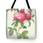 Rosa Centifolia Prolifera Foliacea Tote Bag by Pierre Joseph Redoute