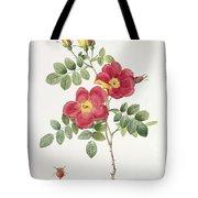 Rosa Eglantera Punicea Tote Bag by Pierre Joseph Redoute
