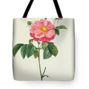 Rosa Gallica Flore Marmoreo Tote Bag by Pierre Joseph Redoute