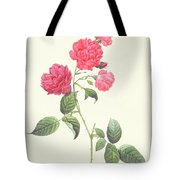 Rosa Indica Caryophyllea Tote Bag by Pierre Joseph Redoute