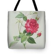 Rosa Indica Cruenta Tote Bag by Pierre Joseph Redoute