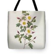 Rosa Pimpinelli Folia Inermis Tote Bag by Pierre Joseph Redoute