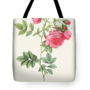 Rosa Pimpinellifolia Flore Variegato  Tote Bag by Pierre Joseph Redoute