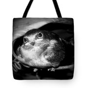 Rusted Perch - Baby Barn Swallow  Tote Bag by Christena  Stephens