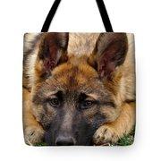Sable German Shepherd Puppy Tote Bag by Sandy Keeton