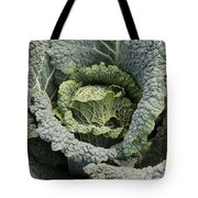 Savoy Cabbage In The Vegetable Garden Tote Bag by Carol Groenen