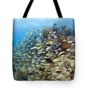 Schools Of Grunts, Snappers, Tangs Tote Bag by Karen Doody