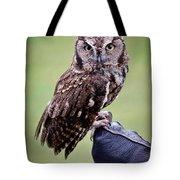 Screech Owl Perched Tote Bag by Athena Mckinzie