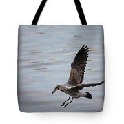 Seagull Landing Tote Bag by Carol Groenen