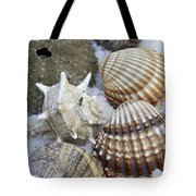 Seashells Tote Bag by Frank Tschakert