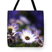 Senetti Dreams Tote Bag by Dorothy Lee
