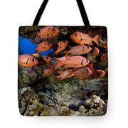 Shoulderbar Soldierfish Tote Bag by Dave Fleetham - Printscapes